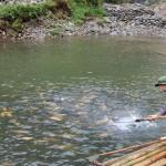 Đặc sản Sapa – Cá hồi Sapa