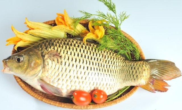Cá chép tươi